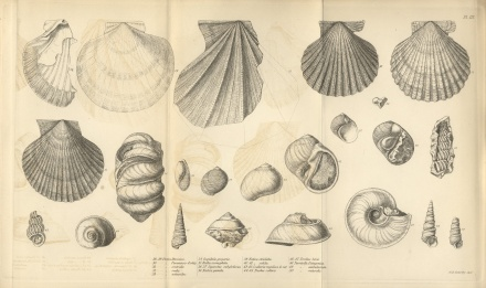 charles-darwin-geological-observations-on-south-america-plate-1-copy-2-1846-trivium-art-history
